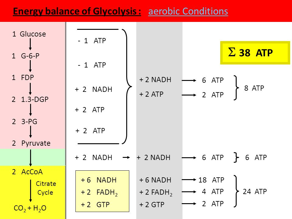Energy balance of Glycolysis : aerobic Conditions