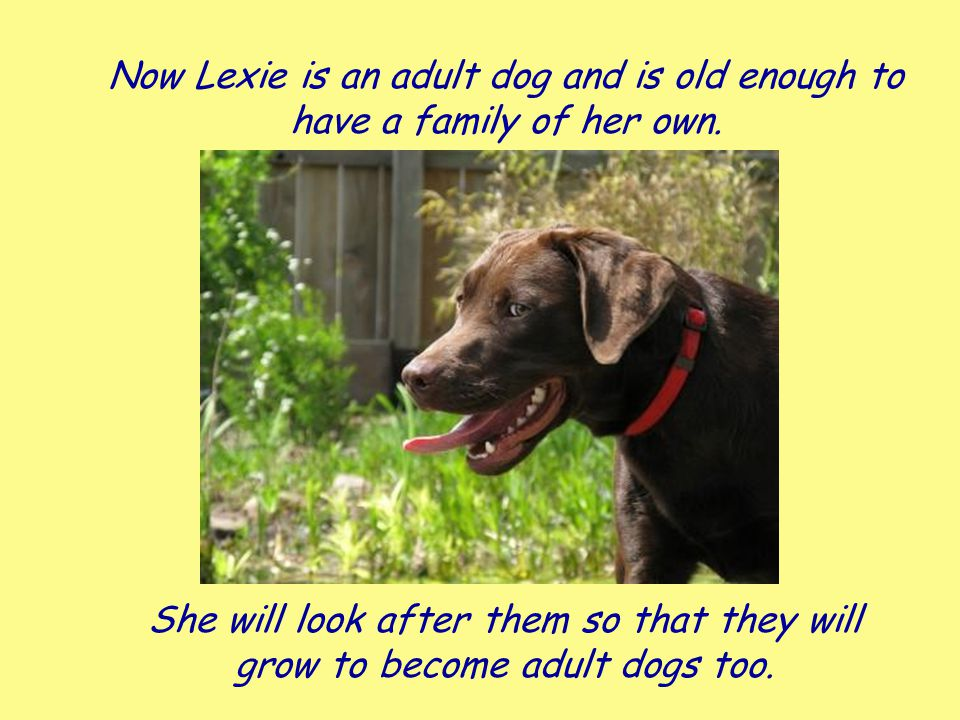 Now Lexie is an adult dog and is old enough to have a family of her own.