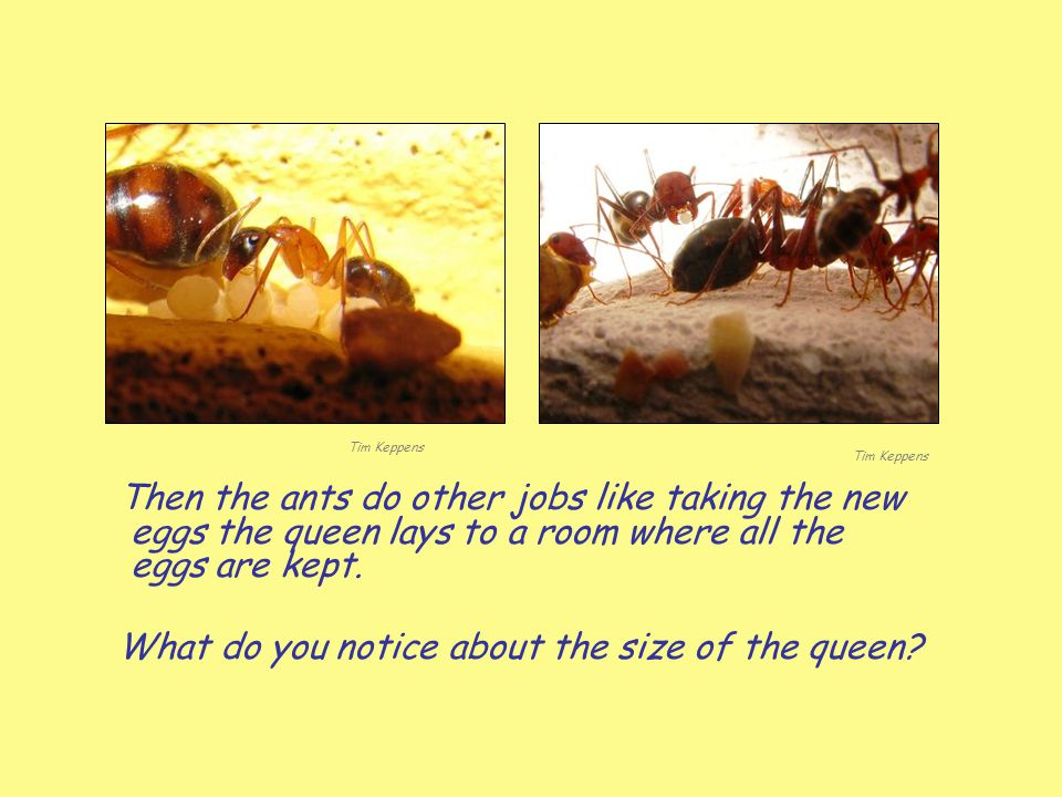 What do you notice about the size of the queen