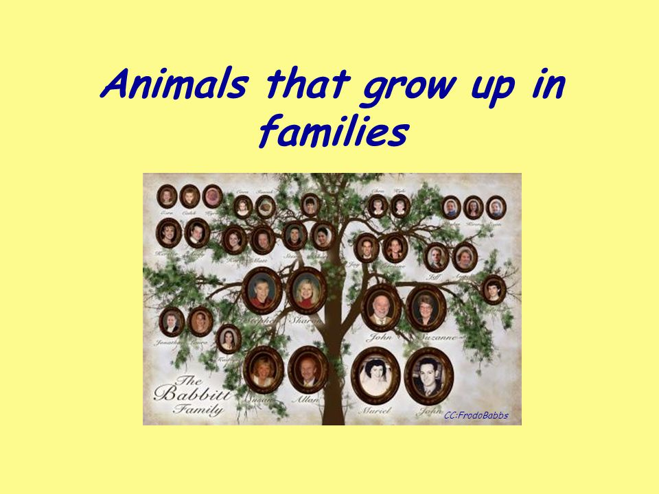 Animals that grow up in families