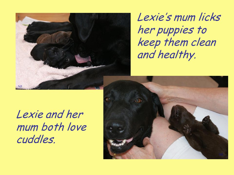 Lexie's mum licks her puppies to keep them clean and healthy.