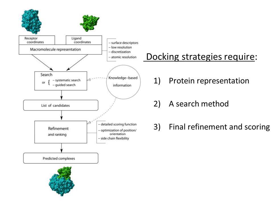 Docking strategies require: