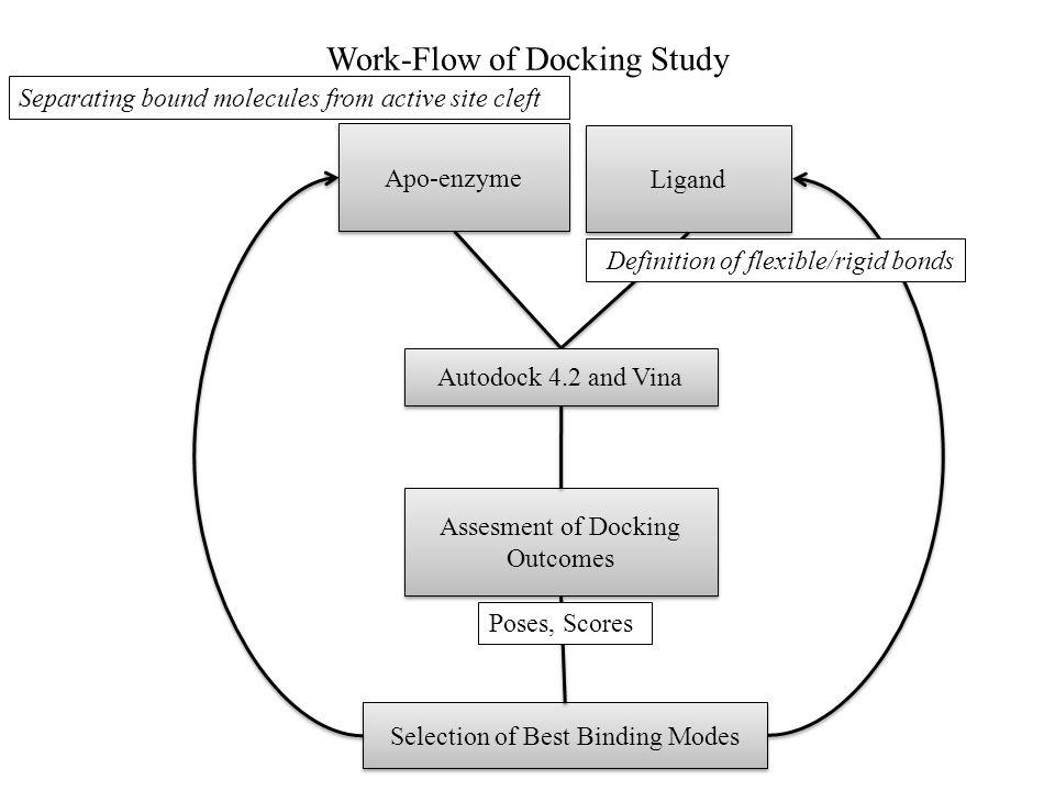 Work-Flow of Docking Study