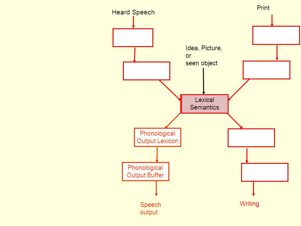 Heard Speech Phonological Output Lexicon Speech output