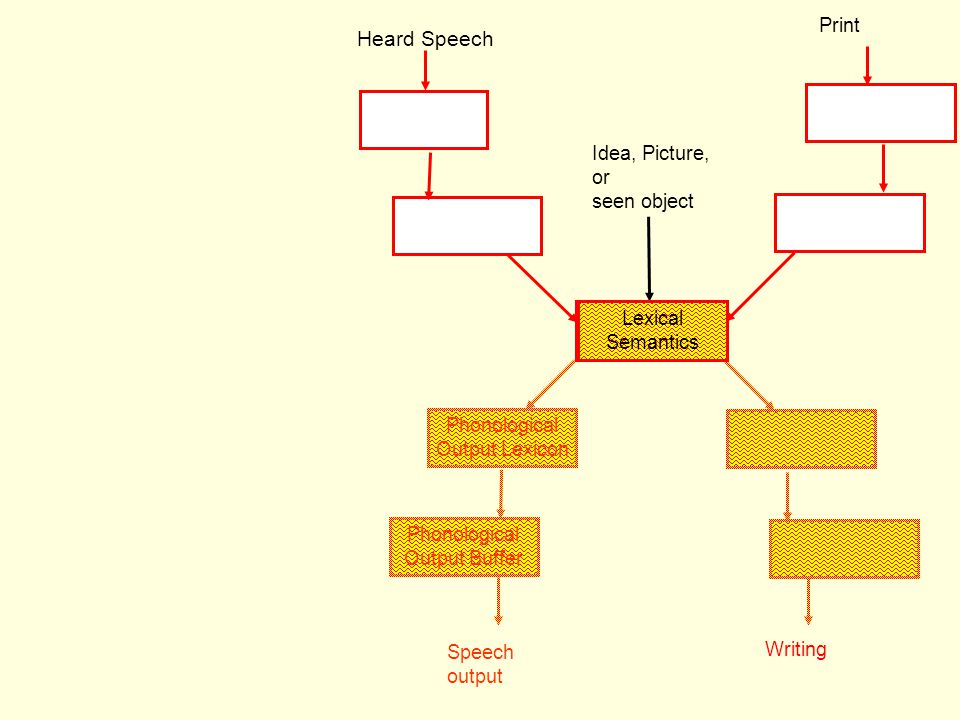 Heard Speech Print Idea, Picture, or seen object Lexical Semantics