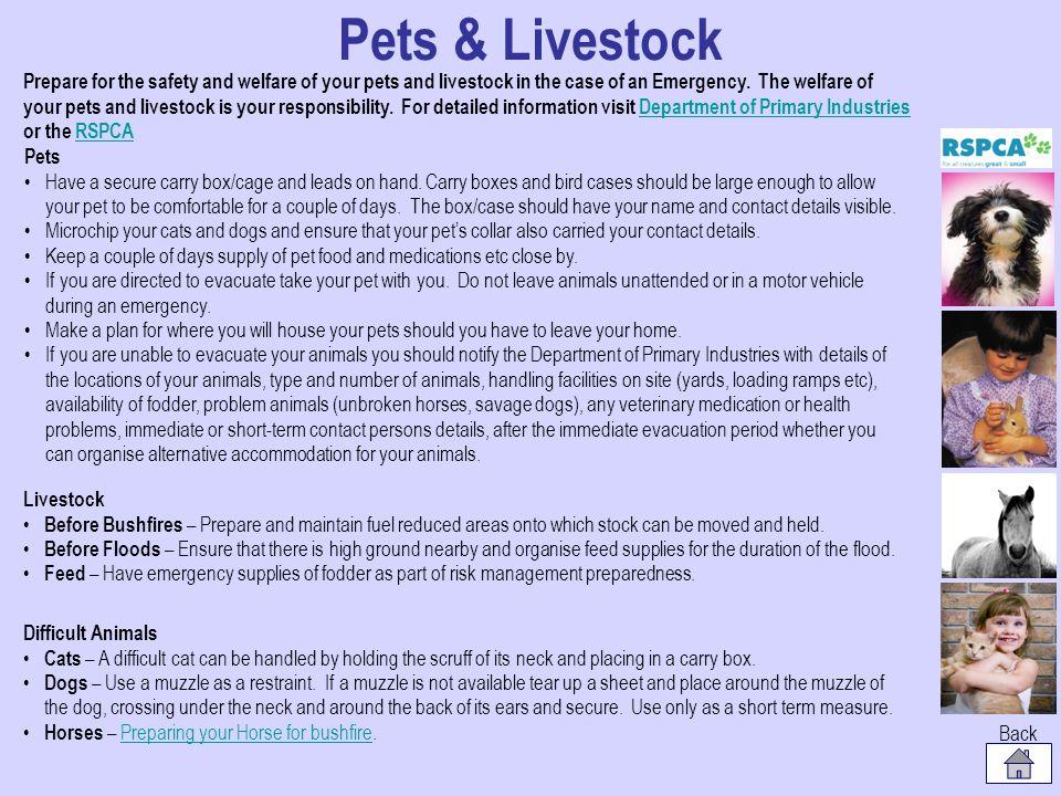 Pets & Livestock