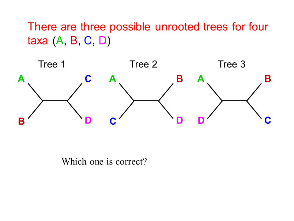There are three possible unrooted trees for four taxa (A, B, C, D)