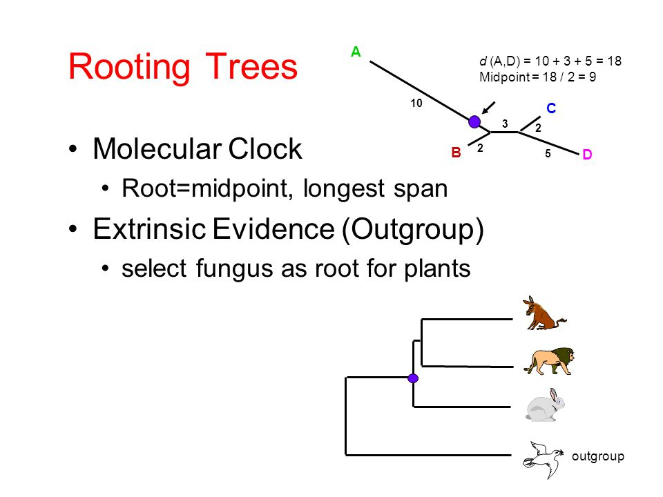 Rooting Trees Molecular Clock Extrinsic Evidence (Outgroup)