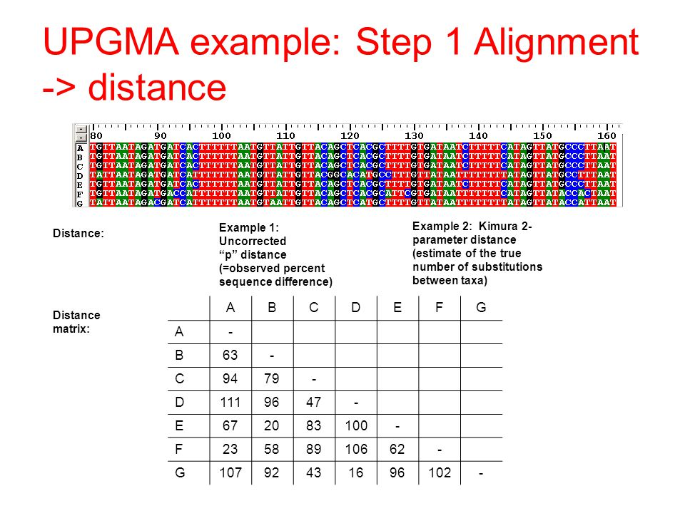 UPGMA example: Step 1 Alignment -> distance