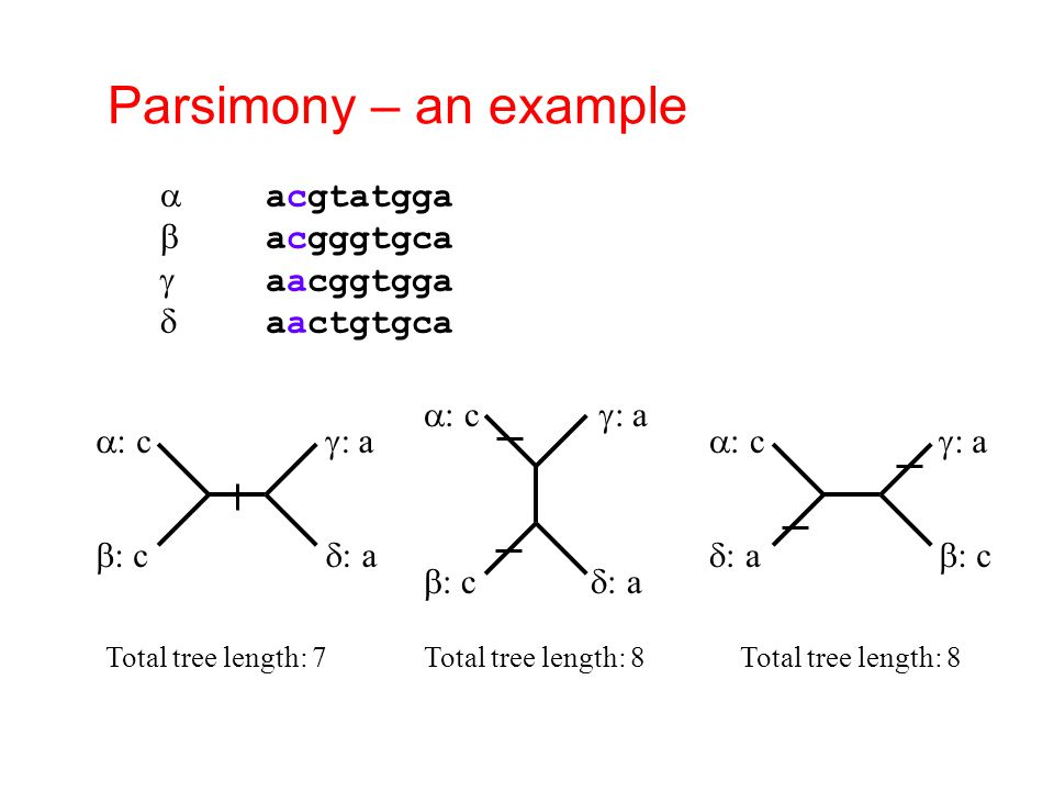Parsimony – an example a acgtatgga b acgggtgca g aacggtgga d aactgtgca