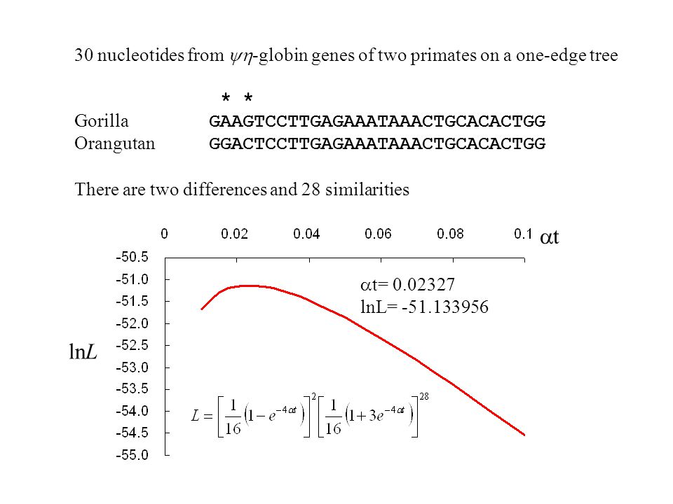 30 nucleotides from yh-globin genes of two primates on a one-edge tree