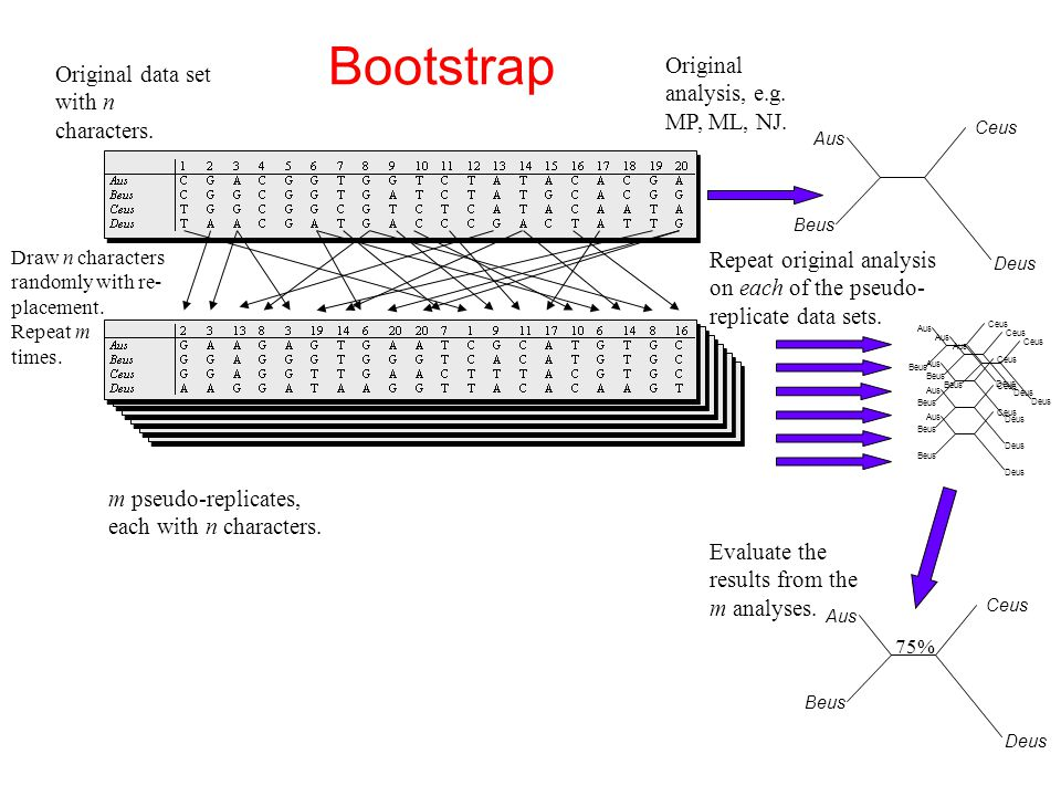 Bootstrap Original analysis, e.g. MP, ML, NJ.
