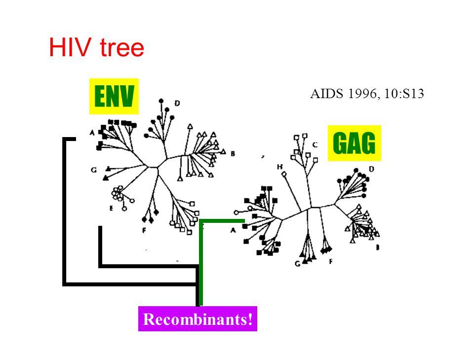 HIV tree ENV AIDS 1996, 10:S13 GAG Recombinants!