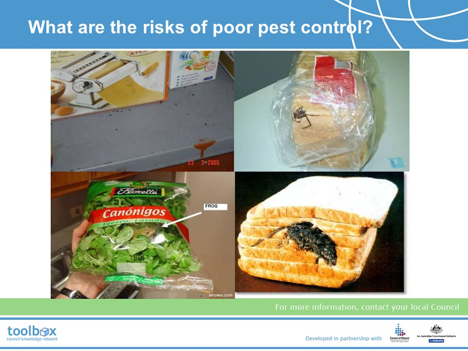 What are the risks of poor pest control