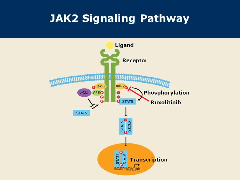 JAK2 Signaling Pathway Ligand Receptor Phosphorylation Ruxolitinib