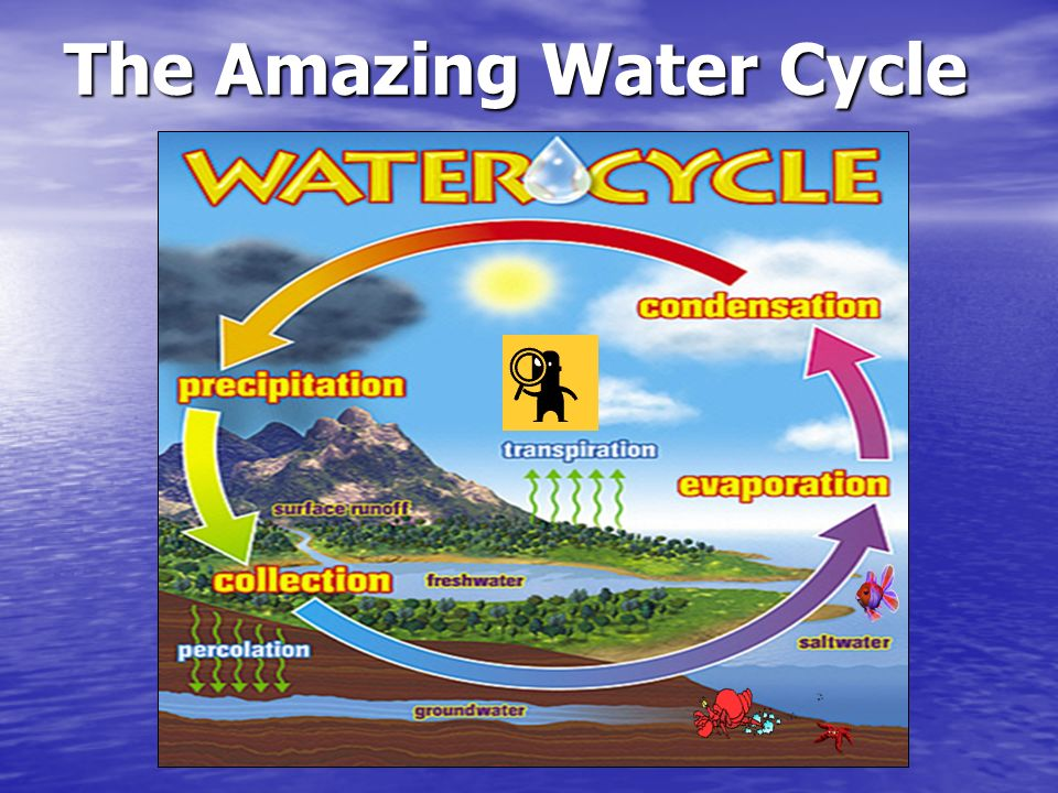 The Amazing Water Cycle