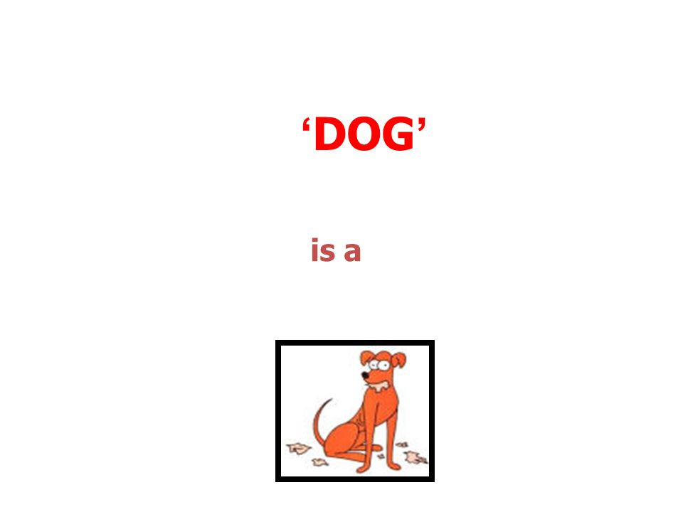 'DOG' is a