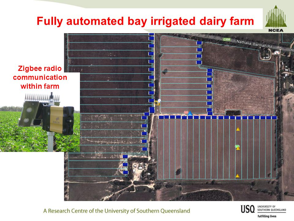 Fully automated bay irrigated dairy farm