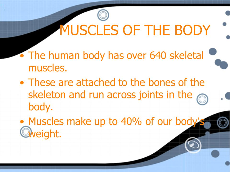 MUSCLES OF THE BODY The human body has over 640 skeletal muscles.