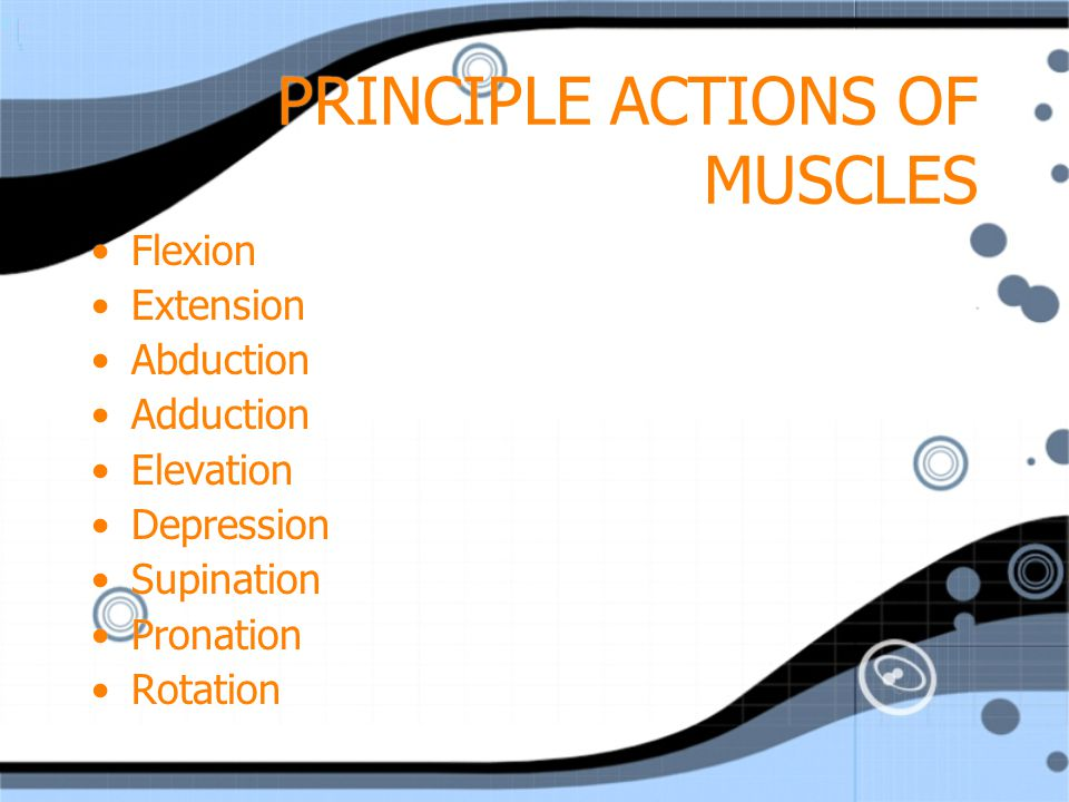 PRINCIPLE ACTIONS OF MUSCLES