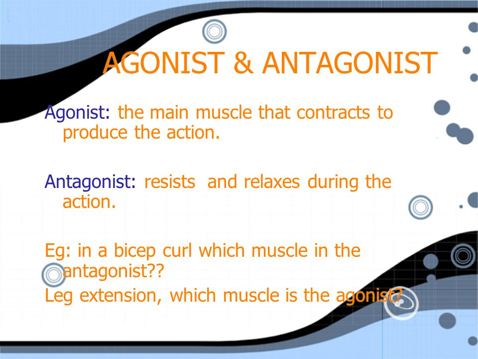 AGONIST & ANTAGONIST Agonist: the main muscle that contracts to produce the action. Antagonist: resists and relaxes during the action.