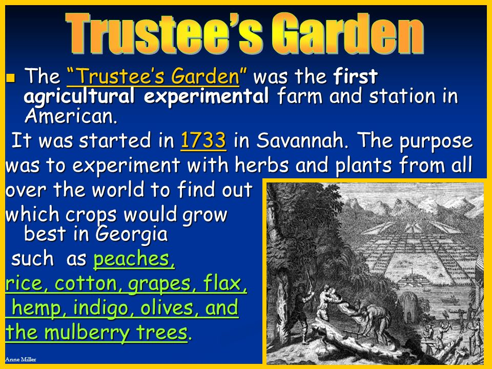 Trustee's Garden The Trustee's Garden was the first agricultural experimental farm and station in American.