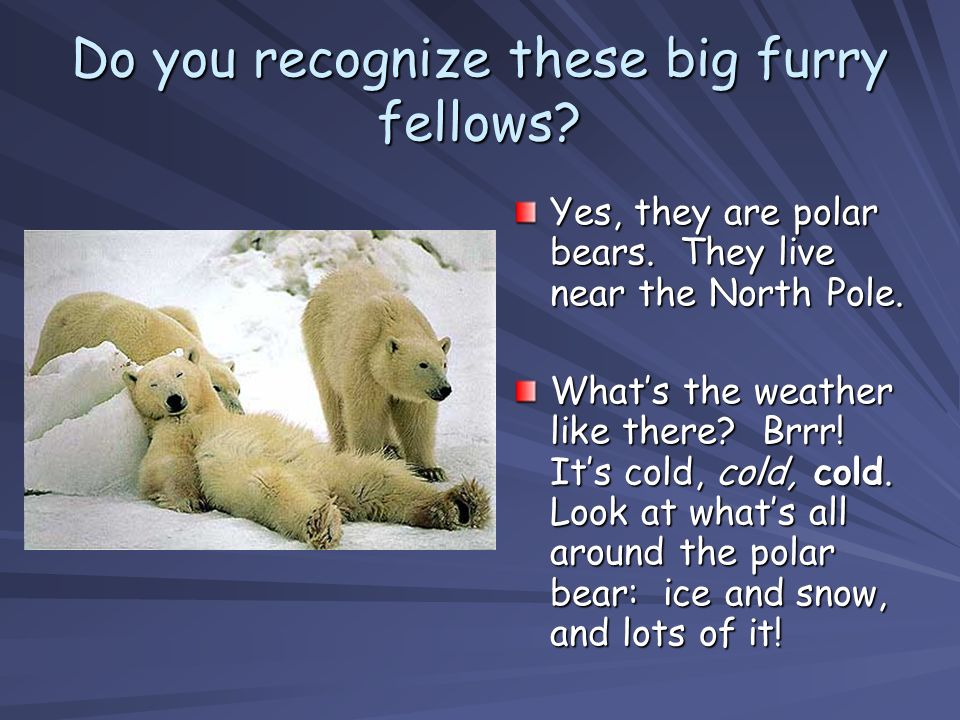 Do you recognize these big furry fellows