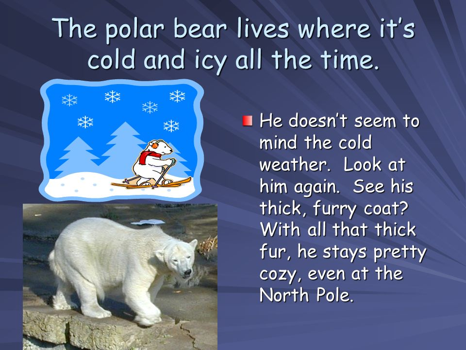 The polar bear lives where it's cold and icy all the time.