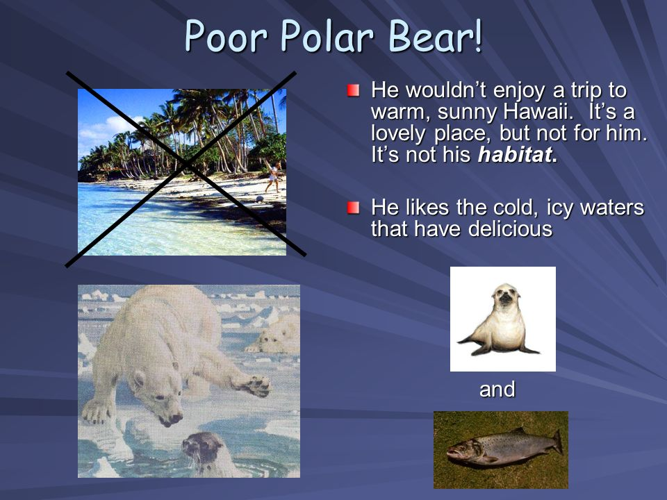 Poor Polar Bear! He wouldn't enjoy a trip to warm, sunny Hawaii. It's a lovely place, but not for him. It's not his habitat.