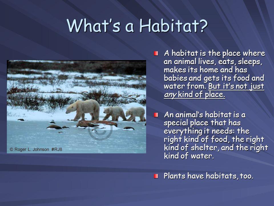 What's a Habitat