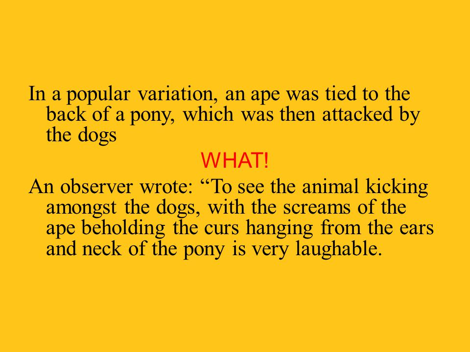 In a popular variation, an ape was tied to the back of a pony, which was then attacked by the dogs WHAT.