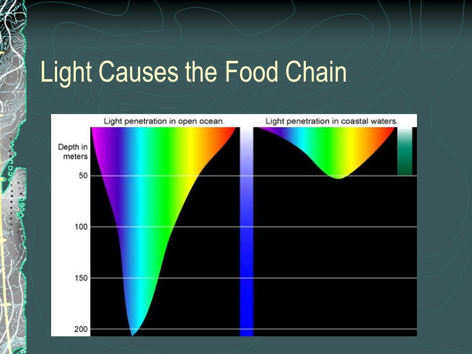 Light Causes the Food Chain