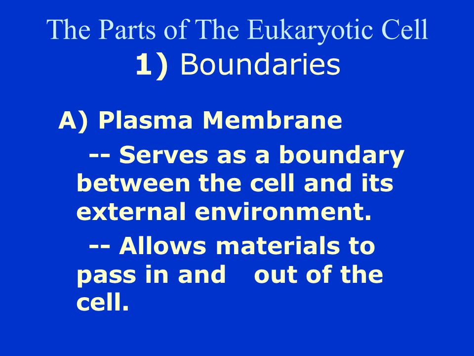 The Parts of The Eukaryotic Cell 1) Boundaries
