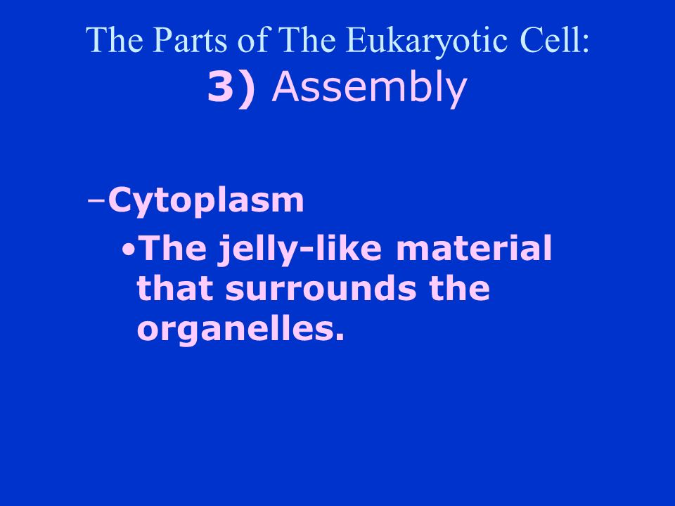 The Parts of The Eukaryotic Cell: 3) Assembly