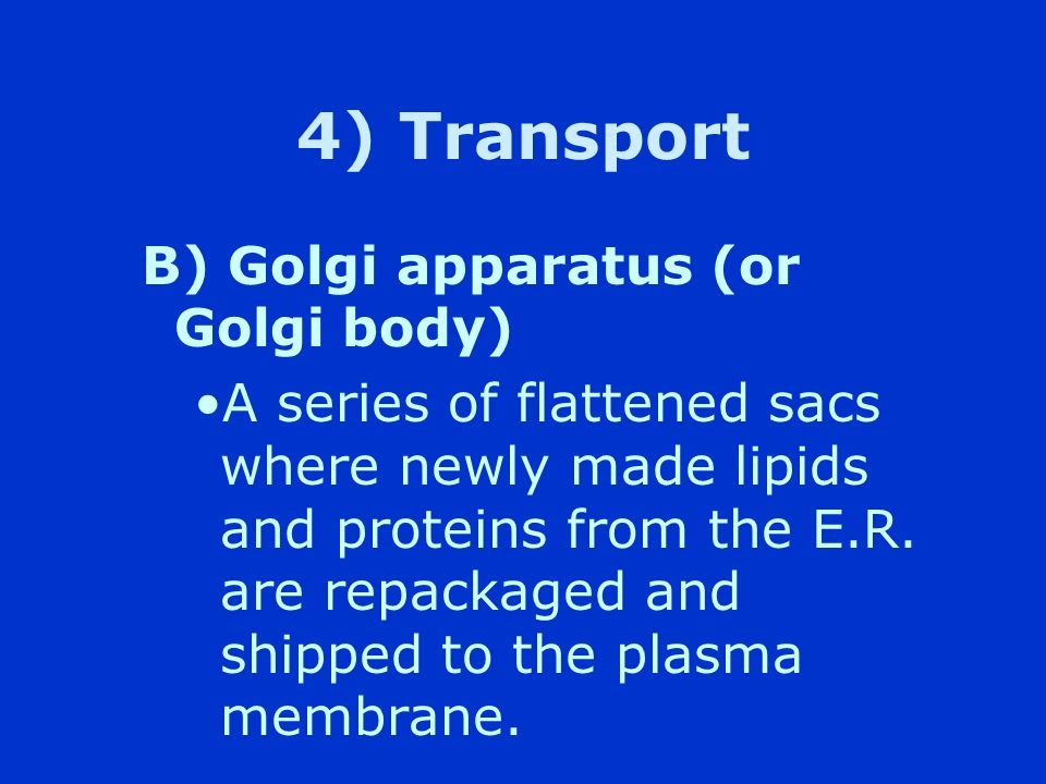 4) Transport B) Golgi apparatus (or Golgi body)