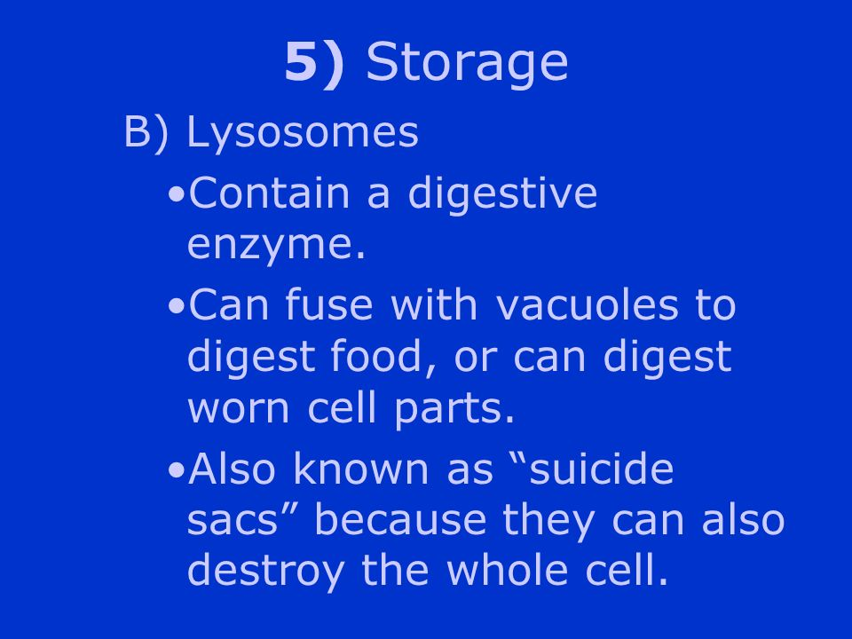 5) Storage B) Lysosomes Contain a digestive enzyme.
