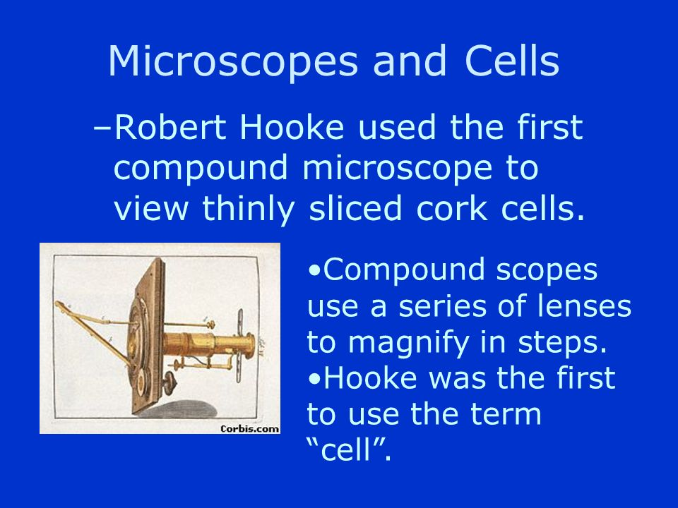 Microscopes and Cells Robert Hooke used the first compound microscope to view thinly sliced cork cells.
