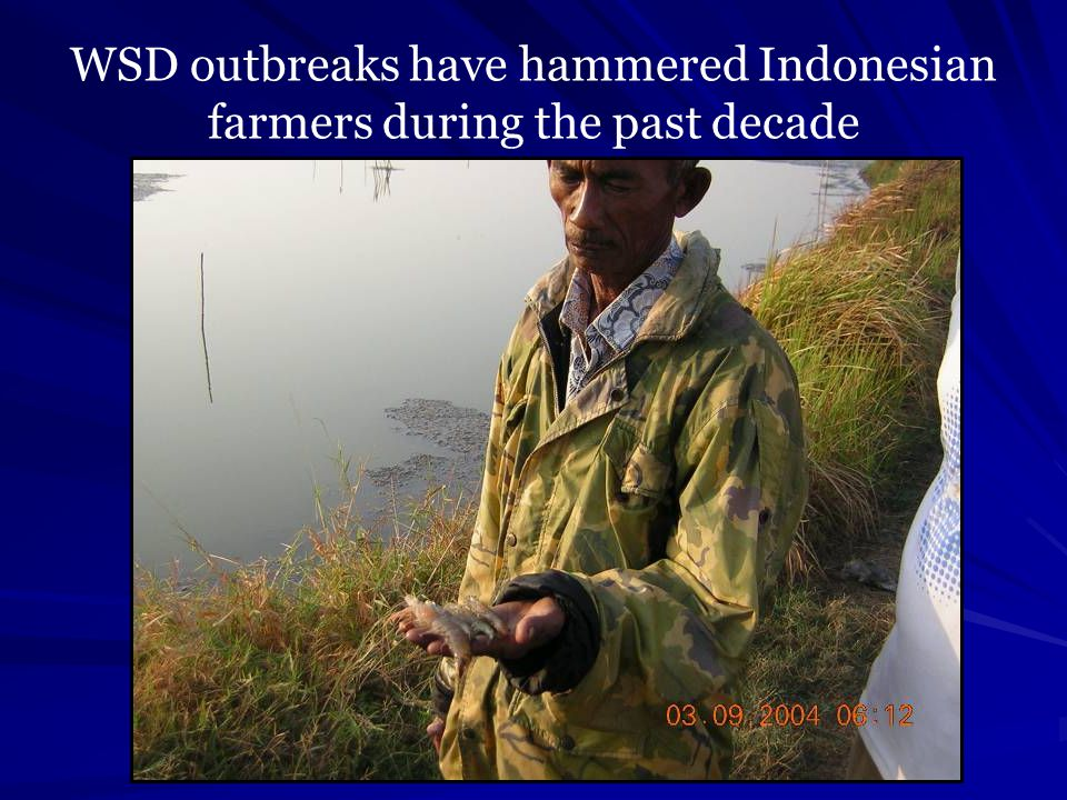 WSD outbreaks have hammered Indonesian farmers during the past decade