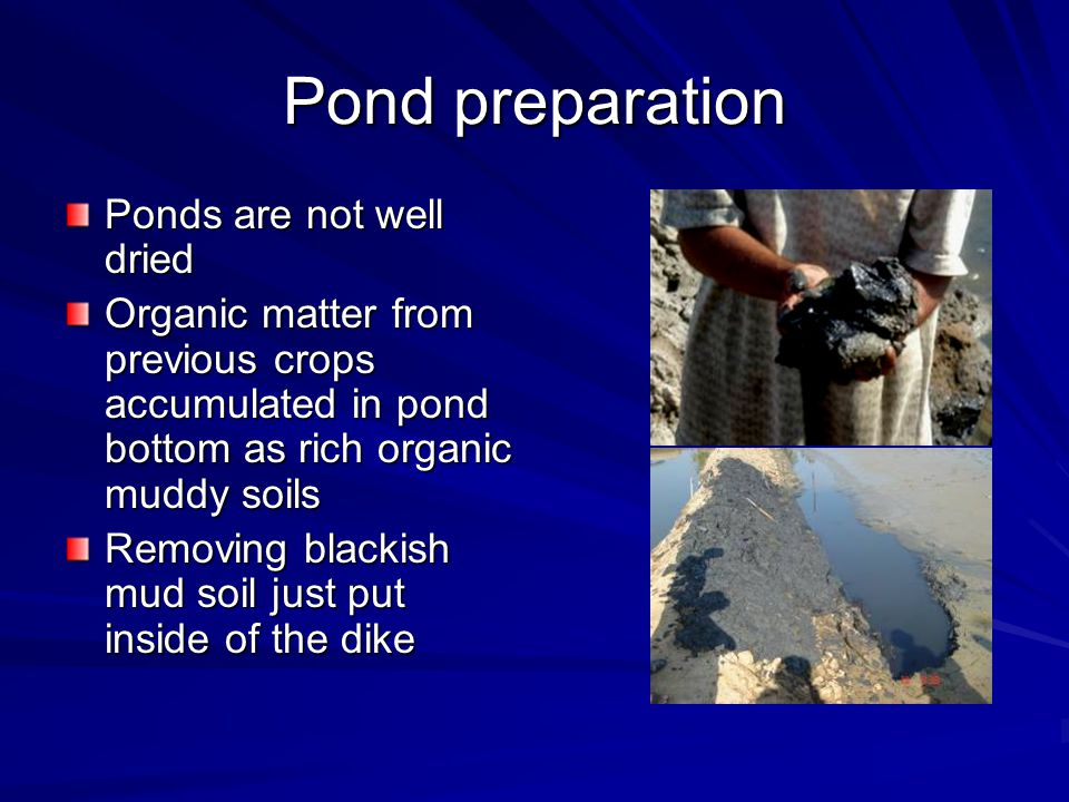 Pond preparation Ponds are not well dried