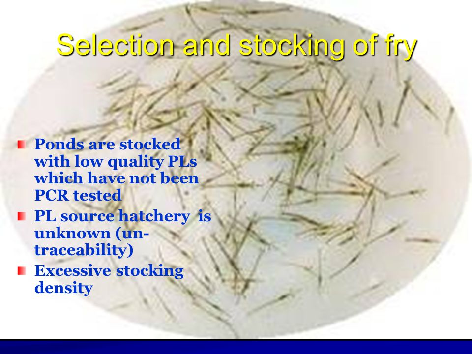 Selection and stocking of fry