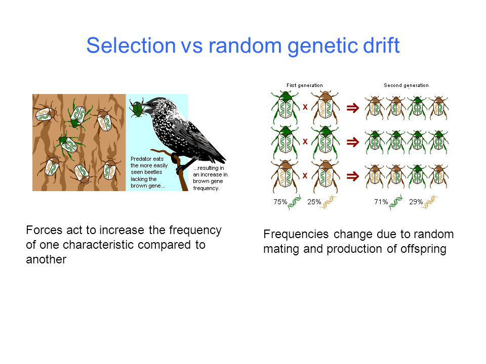 Selection vs random genetic drift