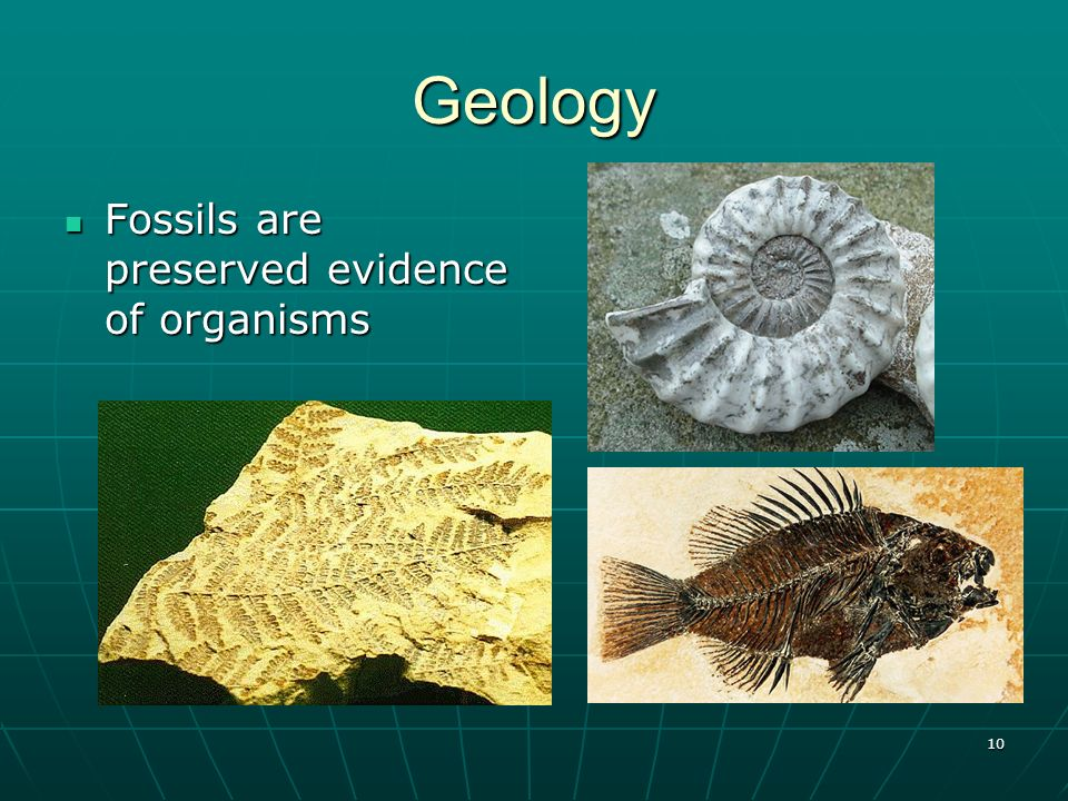 Geology Fossils are preserved evidence of organisms