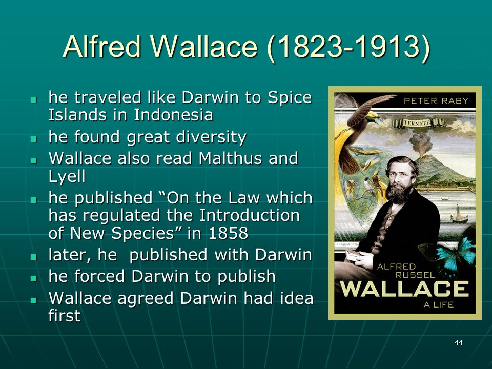 Alfred Wallace (1823-1913) he traveled like Darwin to Spice Islands in Indonesia. he found great diversity.