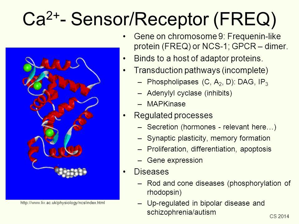 Ca2+- Sensor/Receptor (FREQ)