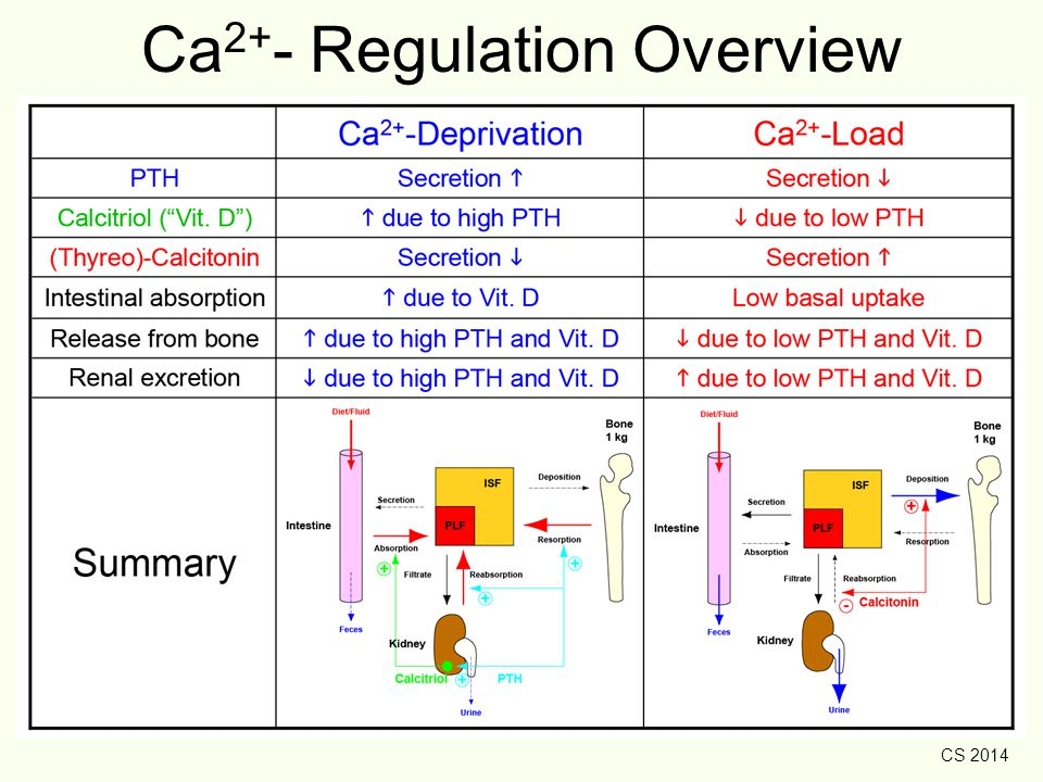 Ca2+- Regulation Overview
