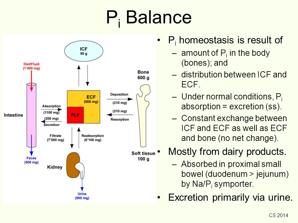 Pi Balance Pi homeostasis is result of Mostly from dairy products.