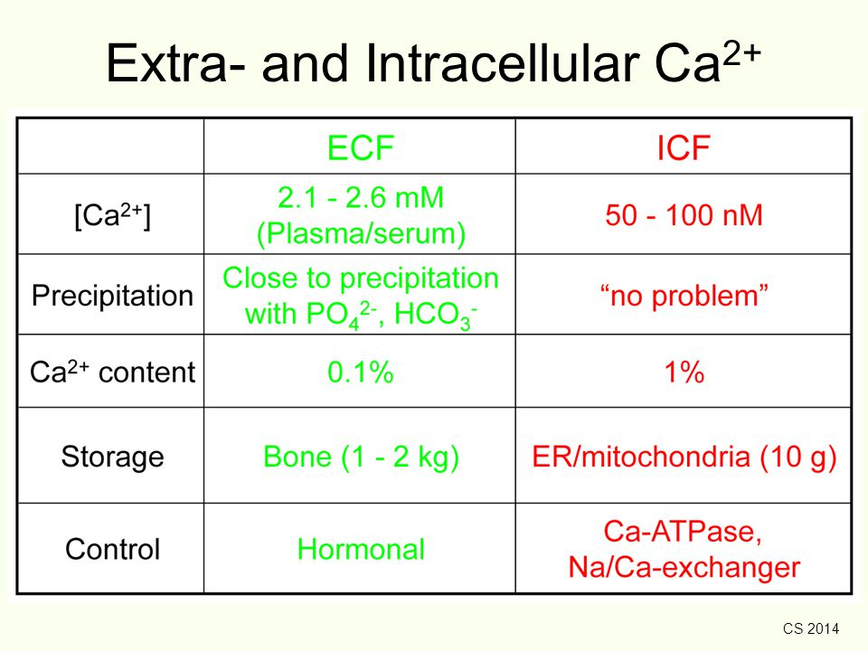 Extra- and Intracellular Ca2+