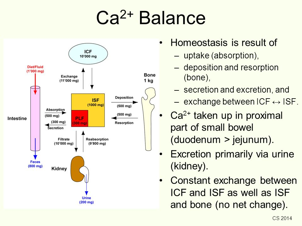 Ca2+ Balance Homeostasis is result of