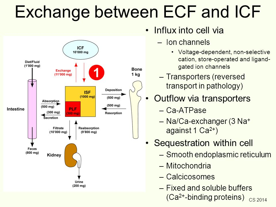 Exchange between ECF and ICF