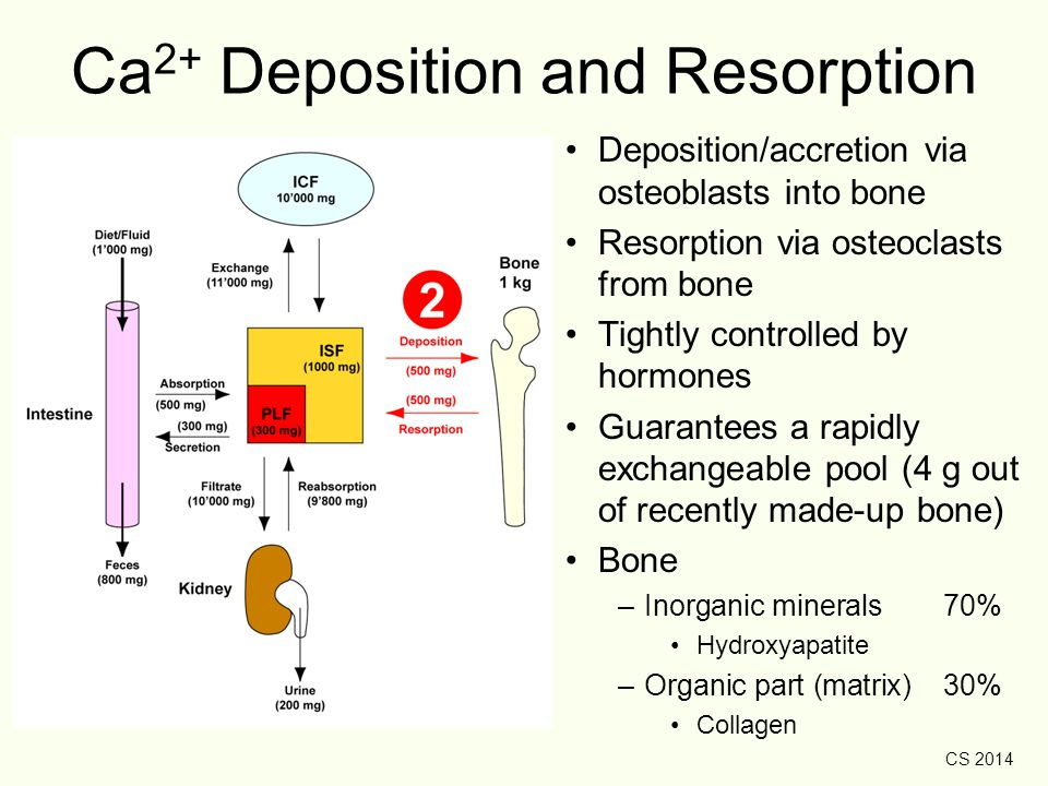 Ca2+ Deposition and Resorption